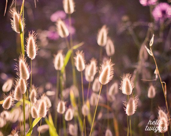 Flower Photography, Nature Photography, Summertime, Girls Room Decor, Dreamy Whimsical - The Purple Breeze