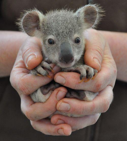 19 animales que no sabías que eran así de monos como bebés | LikeMag