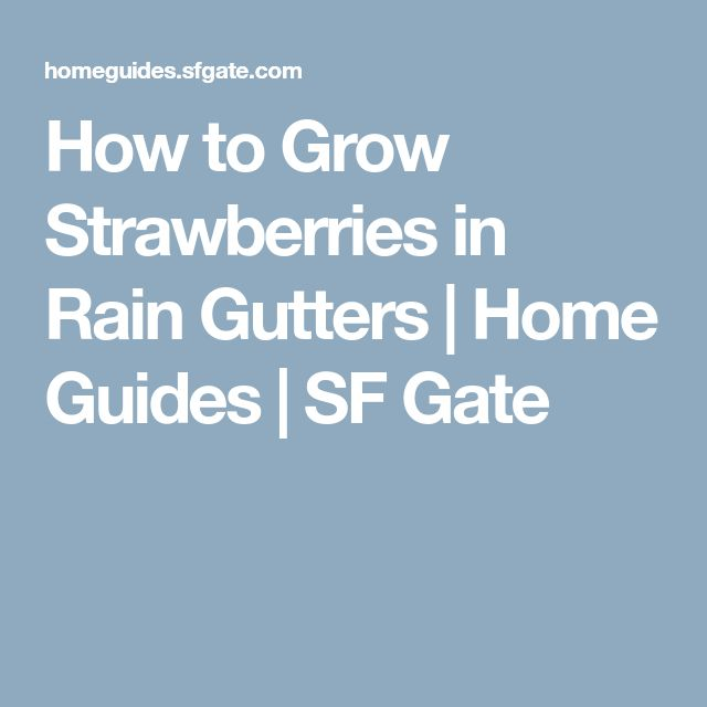 How to Grow Strawberries in Rain Gutters | Home Guides | SF Gate