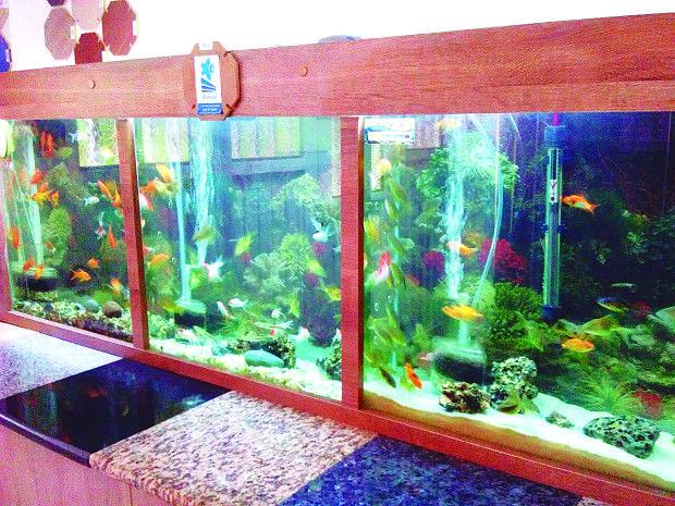 Acuarios y peces Serna, primera y única tienda de peces ornamentales en el municipio de Piendamó / foto por: María Isabel Campos.