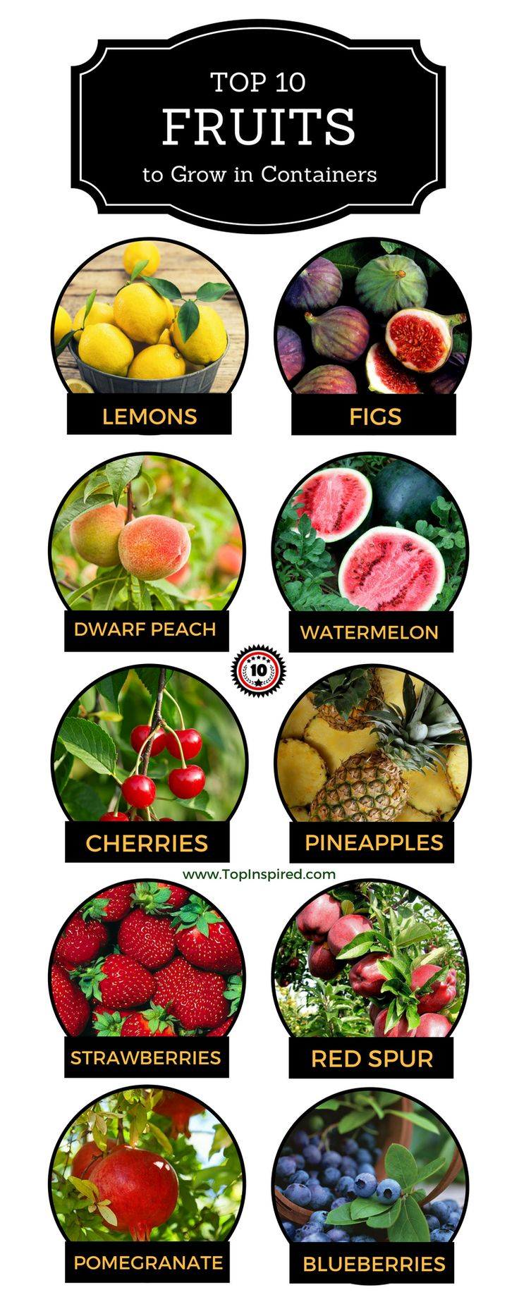 Top 10 Fruits You Can Grow in a Container