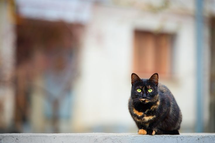 Cat eyes - null