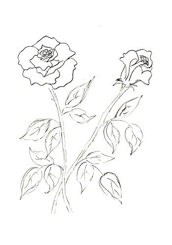 240 best Flowers drawing of rosa images on Pinterest Drawings