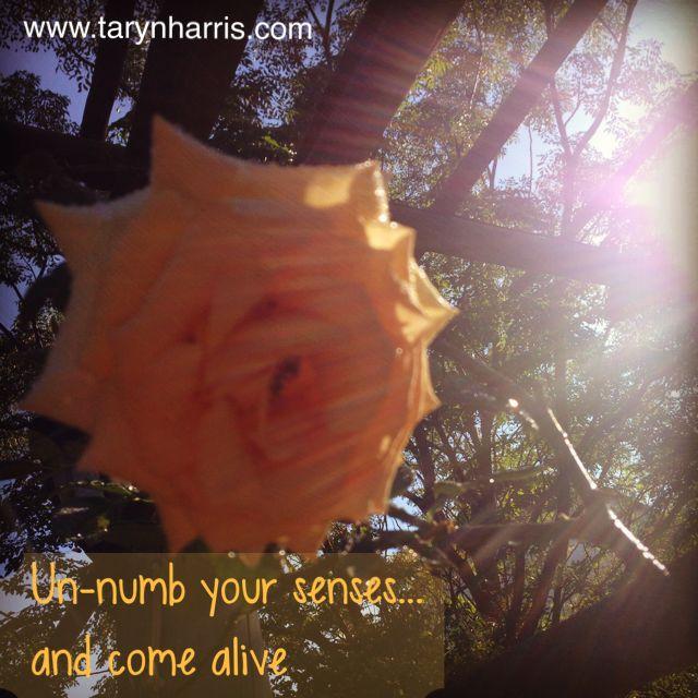 rose sunlight and senses