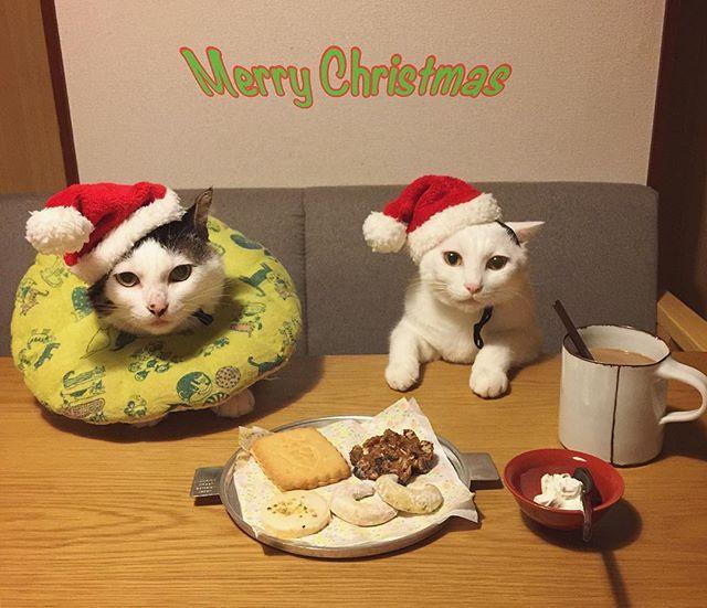 Merry Christmas  #夜中にこっそり おやつタイム☆ @terreverte_opera のソシソンフリュイは、オススメのクリームチーズをぬりぬりして♩ #クリスマス #八おこめ #ねこ部 #cat #ねこ #八おこめ食べ物 #八おこめズラ