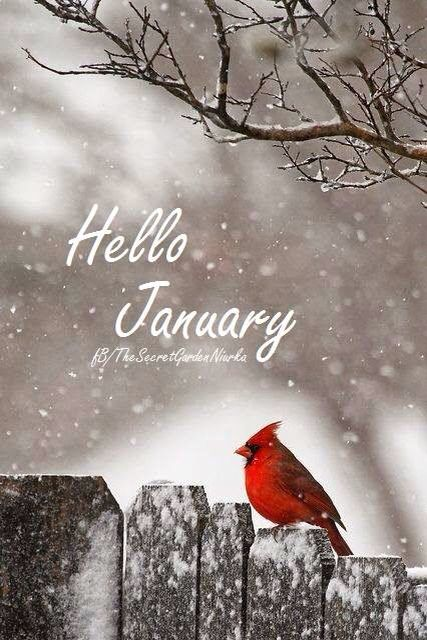 January Quote                                                                                                                                                                                 More
