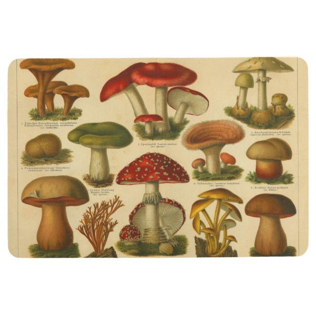 Vintage Mushroom Variety Illustration Red Green Floor Mat Zazzle Com Stuffed Mushrooms Vintage Mushroom Illustration Vintage Mushroom
