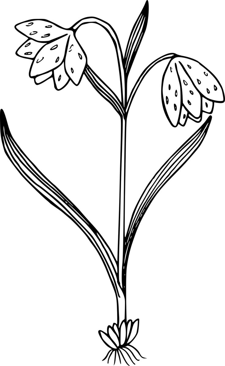 31 best fence walls images on pinterest coloring books drawings
