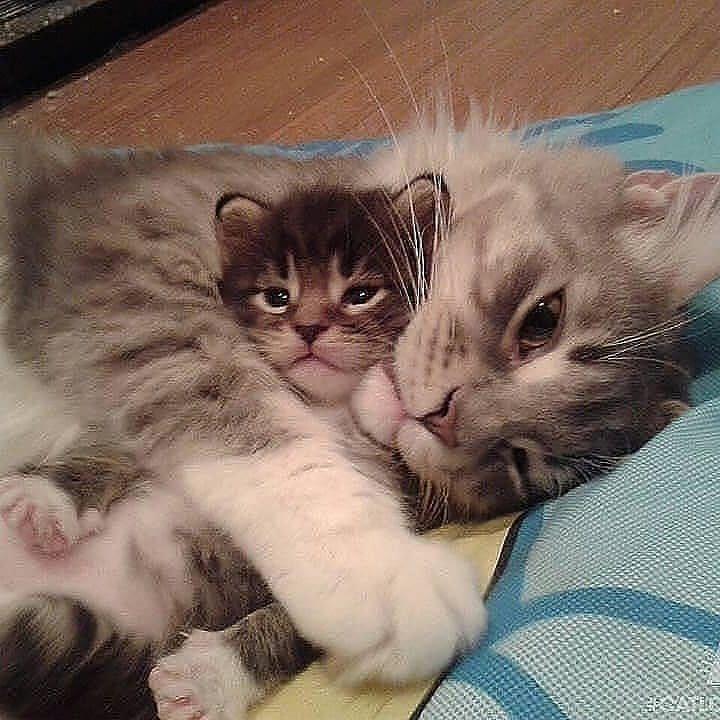 "Cute Cats Kittens en Instagram: ""Tan dulce 😊. Etiqueta a alguien ❤ Por @catpist …"