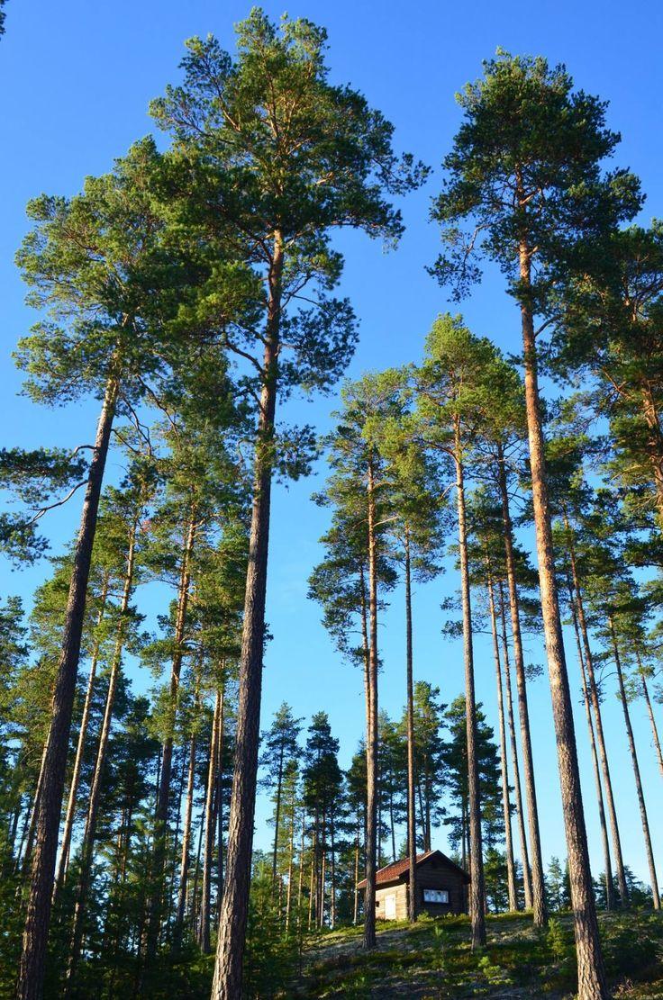 Liten stuga i skogen, Dalarna | Kleine Hütte im Wald, Schweden | Little forest ja bin, Sweden