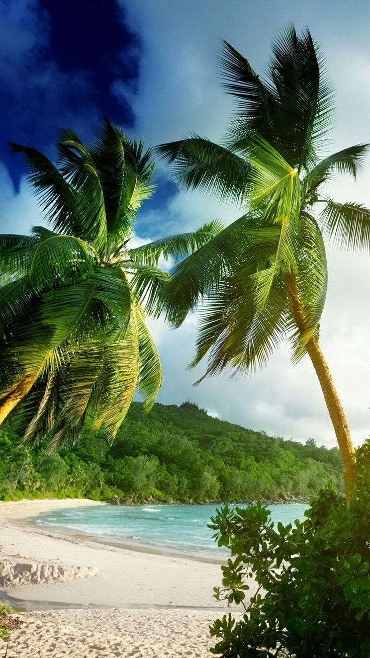 Wallpaper iphone tropical - Beach Wallpaper