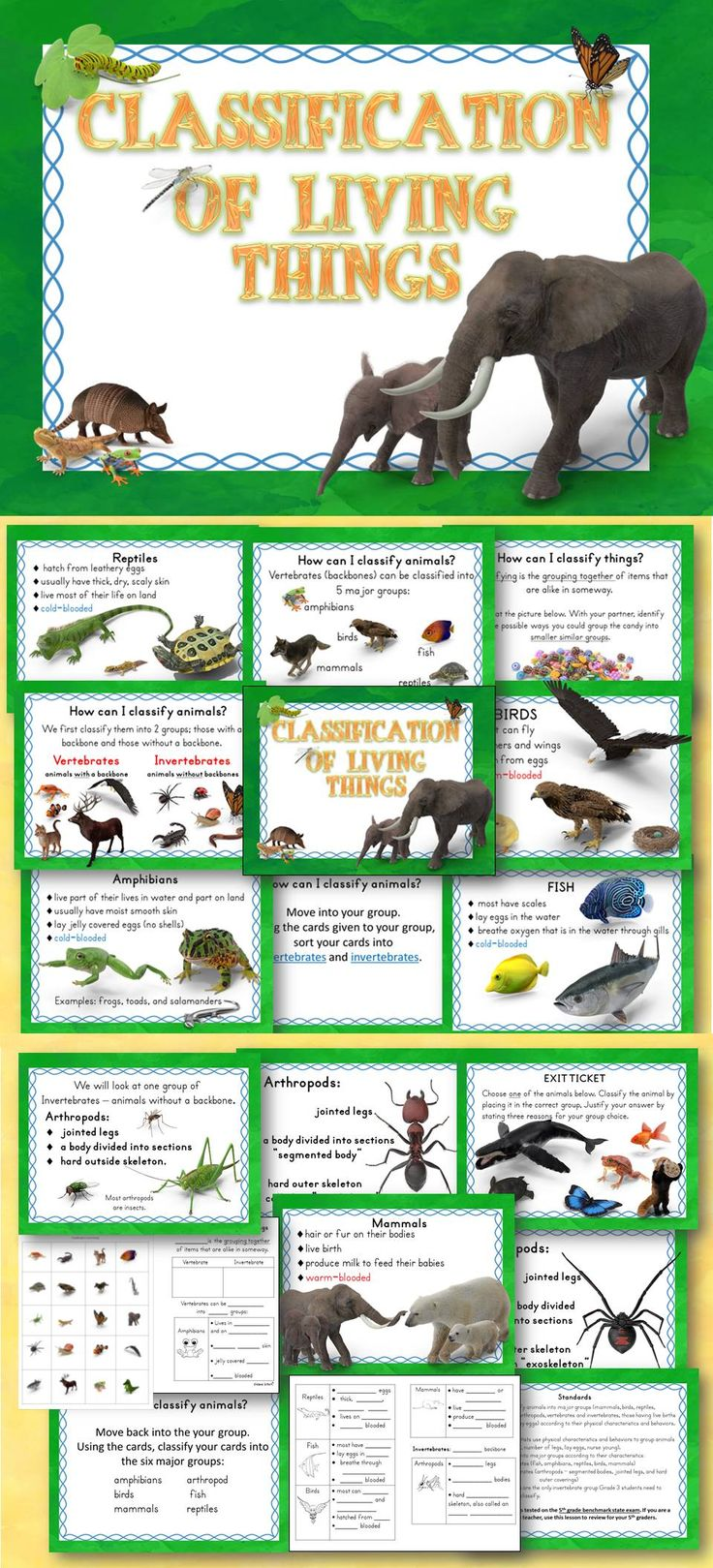 Animal Classification of Living Things PowerPoint and