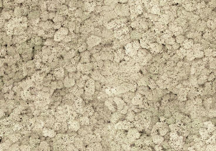 Torvtak icemoss misty white. Een mospaneel of moswand van Nature at home is een prachtige, onderhoudsvriendelijke en natuurlijke decoratieve blikvanger in elk interieur. Bovendien heeft mos een sterke geluiddempende werking.
