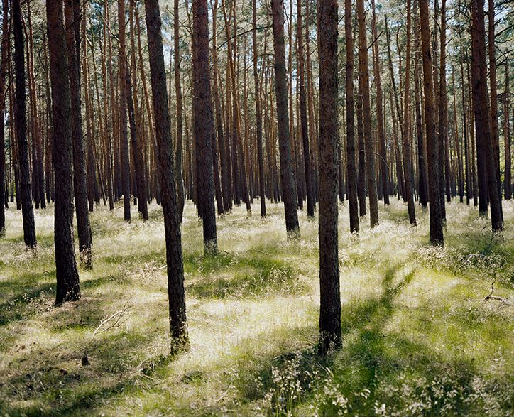 Wim Wenders: Forest in Brandenburg, 2014. Image courtesy the artist and BlainSouthern.
