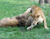 Gradina Zoologica din Targu Mures