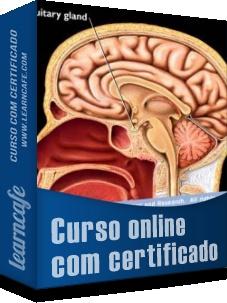 SISTEMA NERVOSO - ESTUDAREMOS: Encéfalo (Córtex Cerebral, Ponte, Hipotálamo, Tálamo, Bulbo, Cerebelo), Medula Espinhal; Sistema nervoso periférico: Nervos Cranianos, Nervos Espinhais; Neurônios: Pericário, Dendritos, Axônio; Células da Glia: oligodendrócito/Célula de Schwann, Astrócitos, Ependimócito, Microglia; Meninges: Dura-máter, Aracnoide, Pia-máter; Sistema Nervoso Autônomo: Sistema nervoso simpático, sistema nervoso parassimpático, Entérico.