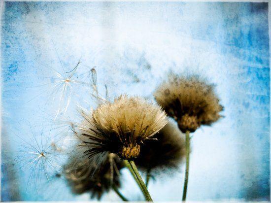 Taidelainaamo - Laura Kansanen-Stavale: Fluff