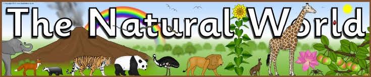 The Natural World display banner