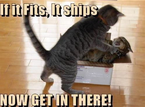 Save on shipping!: Fit, Funny Animal Pictures, Sibling Rivalry, Funny Cat, Funny Pictures, Care Packaging, Funny Stuff, Ships, So Funny