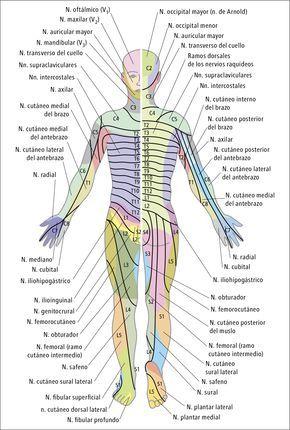 Sensibilidad, trastornos - Síntomas - Medicina Interna