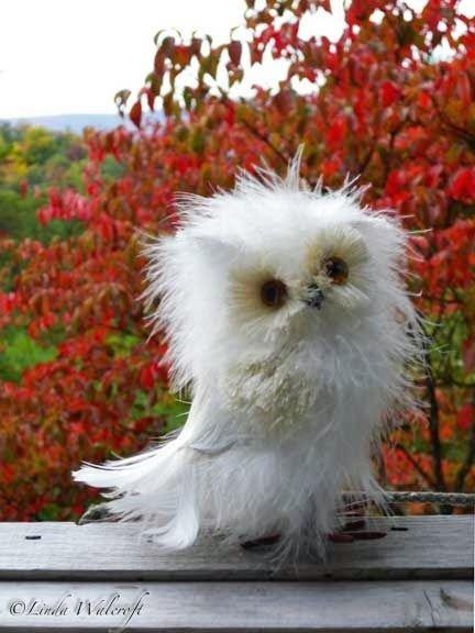 OWL :)