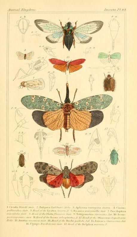 G. Henderson,1834-1837. Ilustración científica | Historia natural, insectos