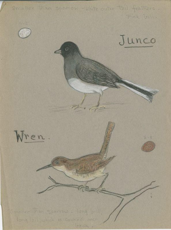 Junco and Wren | saskhistoryonline.ca