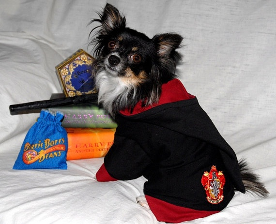 OMG a Gryffindor sweater! Chester's a big Harry Potter fan ...