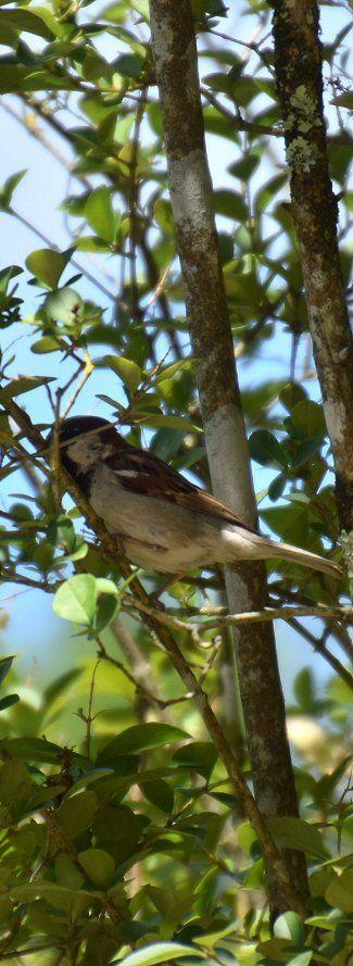 Natur og fugl energirenovering