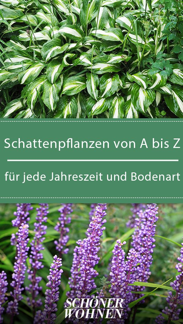 Schattenpflanzen & Schattengewächse von A-Z