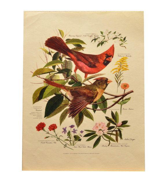 Vintage Arthur Singer Bird Print  Cardinal by affordablevintage4U, $14.99