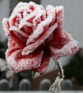 Quando arriva l'#inverno bisogna prestare particolarmente attenzione alla cura delle #piante. Segui i nostri consigli per sapere quali sono i trattamenti corretti per mantenere le tue piante in salute in questa stagione