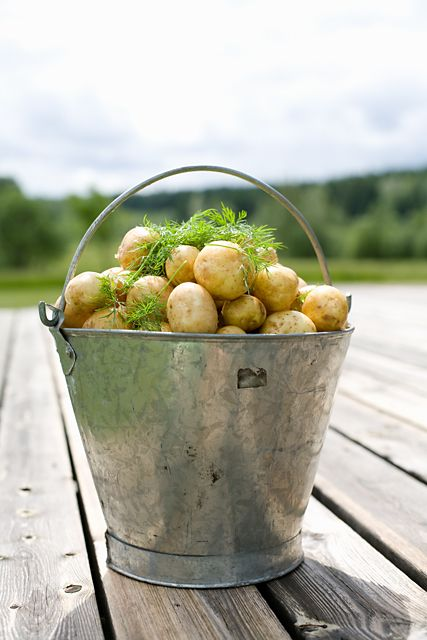 #Swedish new #potatoes! Boil the potatoes and stir in a knob of butter and lots of freshly chopped #dill before serving. Heavenly!