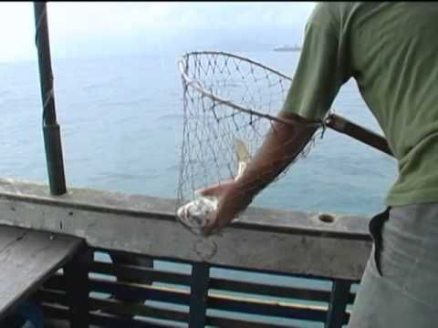 Canal Pesca Alternativa