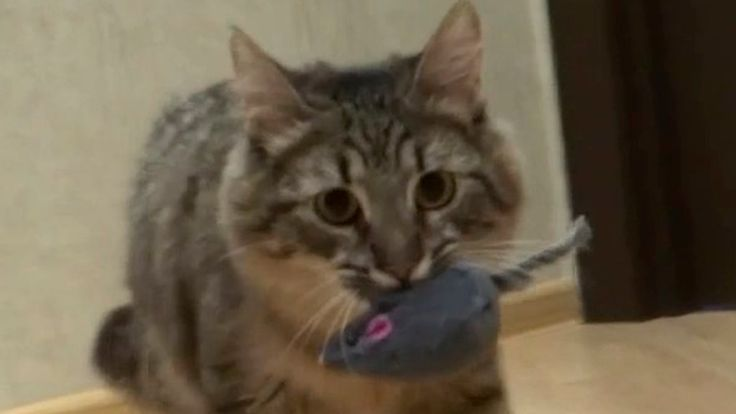My funny cat plays with a mice