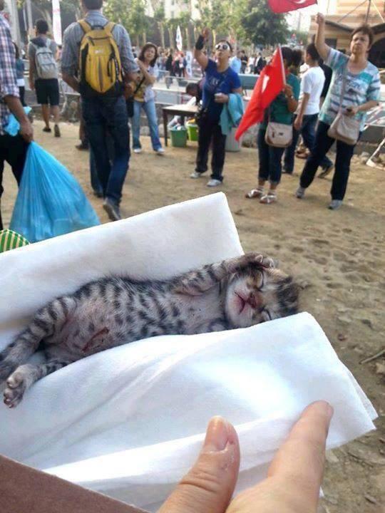 Taksim Gezi Parkı'nda dünyaya gözlerini açtı. Adı çapulcu oldu :)