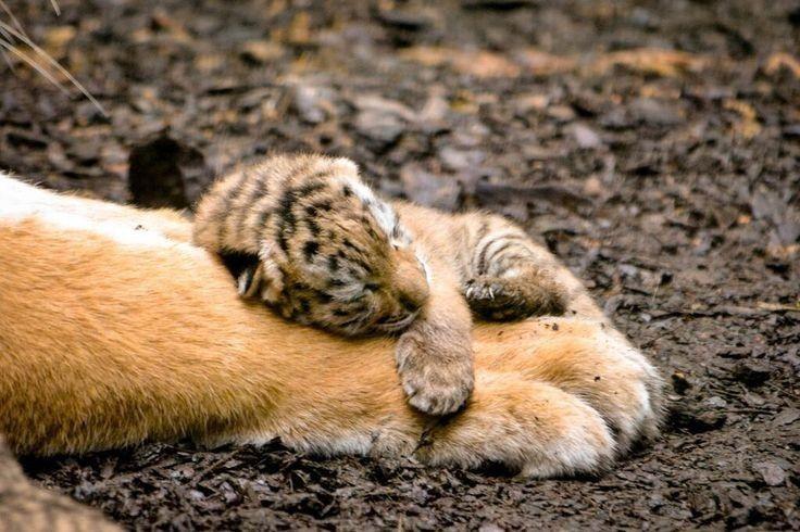 Awwwwww … Das ist so bezaubernd 😍   – The cutest of all….