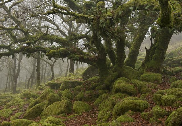 Epiphytic by Duncan George, via Flickr