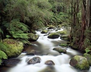 Gippsland Gippsland Gippsland, Australia - Travel Guide