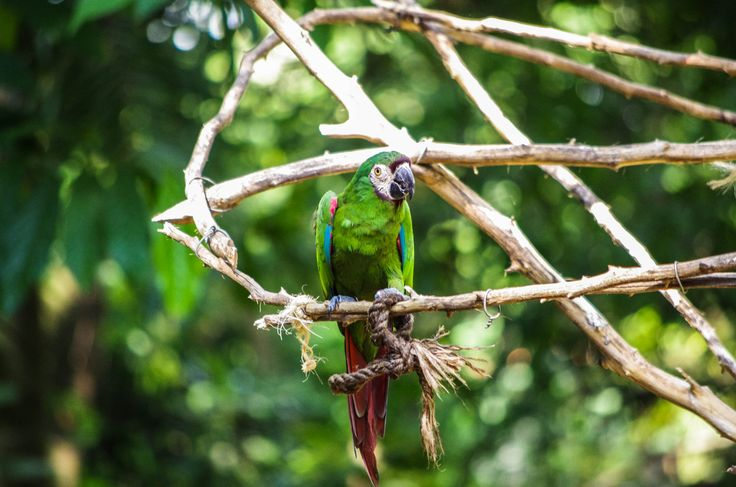 A macaw hanging out on some branches.