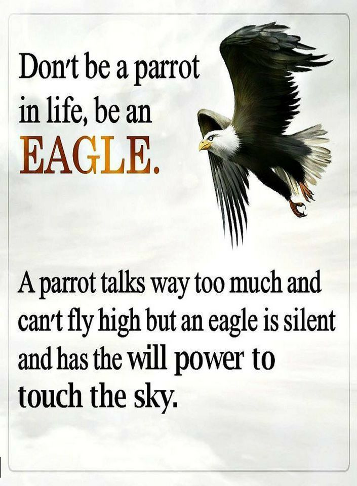Quotes Don't be a parrot in life, be an eagle. A parrot talks way too much and can't fly high but an eagle is silent and has the will power to touch the sky.