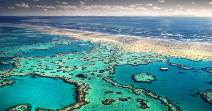 Visit Australia's Great Barrier Reef without even leaving Twitter with live broadcast