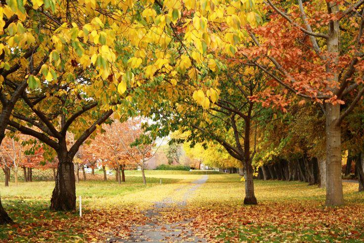 Beautiful autumn colours ...  #millbrookresort #autumncolours