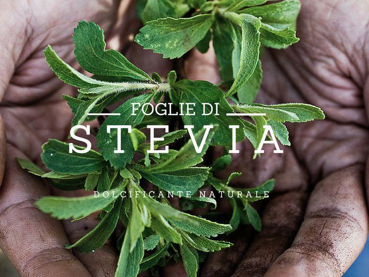 Foglie di Stevia | www.bacchedigoji.it