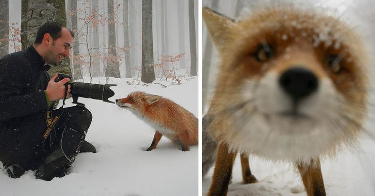 As fascinating as nature and wildlife photography can be, there are often beautiful and unforgettable things that happen behind the lens as well. Usually, these can only be enjoyed by the photographers themselves, but occasionally, we're lucky enough to have a second photographer on the scene to capture these special moments.