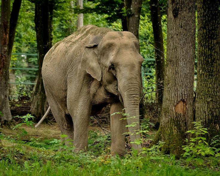 Tania elefánt