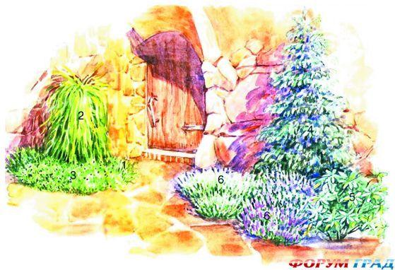 Зимой и летом одним цветом: великолепный сад из хвойных пород деревьев и кустарников - Высокие и низкие, могучие и стройные, деревья разнолистные, внимания достойные. Весной деревья радостны, печалятся – осенние, они имеют разное порою настроение - Форум-Град