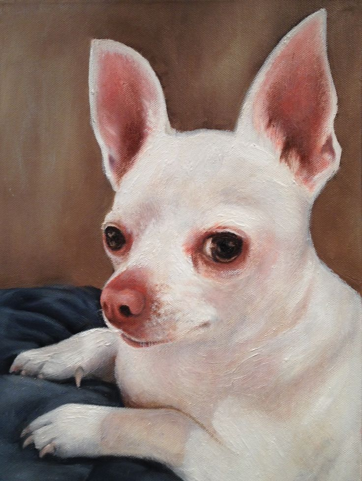 "Pablo the chihuahua! Oil on canvas - 12""x16"""
