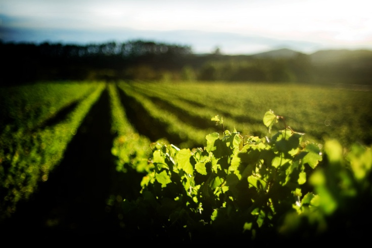 Palliser Estate Winery, we love their wines and have been serving their Pinot Noir since 1991