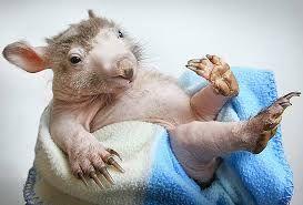 Картинки по запросу себастьян маньяни фото животных